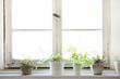 Leinwandbild Motiv 窓辺の観葉植物