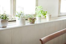 窓辺の観葉植物