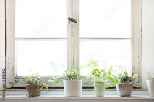 Fotografie, Obraz  窓辺の観葉植物
