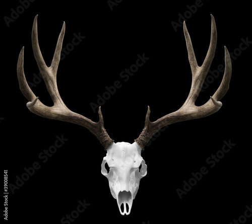 Canvas Print Isolted deer skull