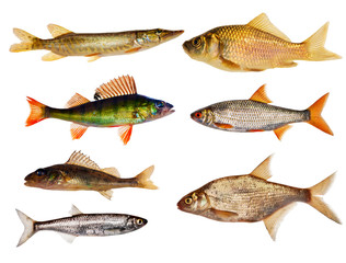 seven isolated freshwater fishes collection