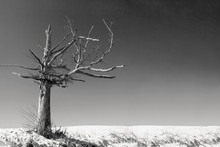 An Old Dead Tree In A Desolate...