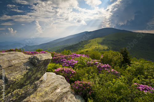 Appalachian Trail Roan Mountains Rhododendron Bloom Poster