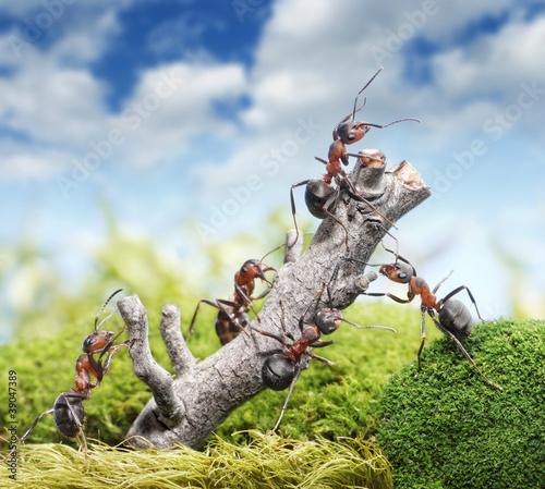 team of ants and rusty tree, teamwork concept Wallpaper Mural