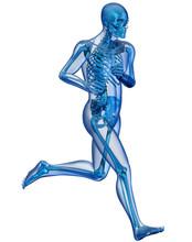 Corpo Umano E Scheletro In Corsa