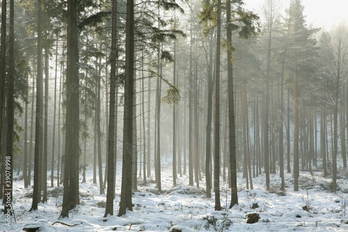 Papiers peints Foret brouillard Coniferous forest on a frosty winter morning