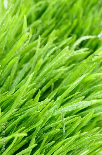 zielone-zdzbla-trawy