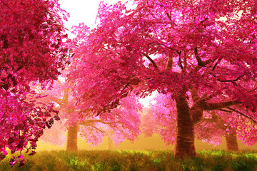 Obraz Mysterious Cherry Blossom Trees