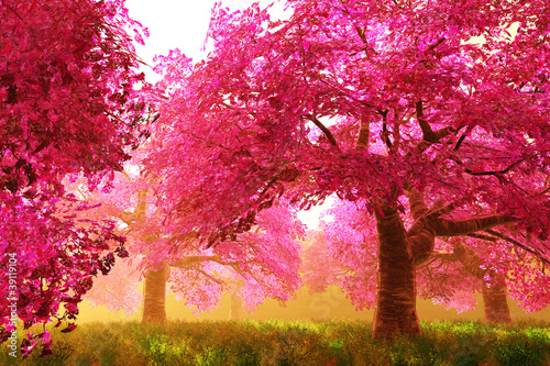 Foto Mysterious Cherry Blossom Trees