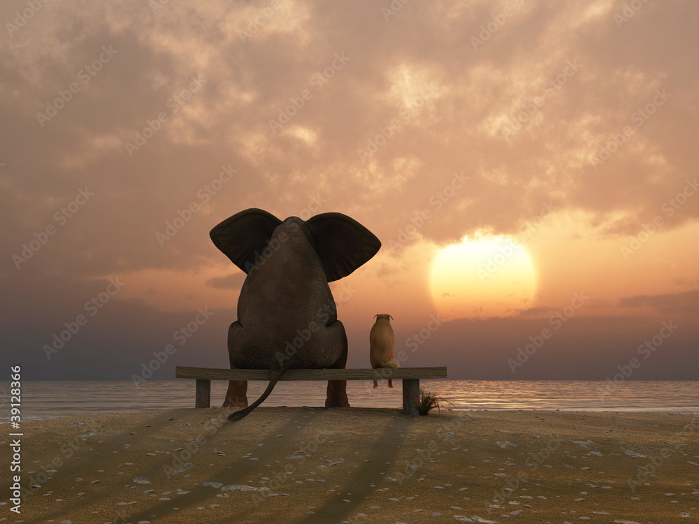 Fototapeta elephant and dog sit on a summer beach
