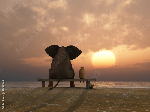 Fototapeta elephant and dog sit on a summer beach obraz