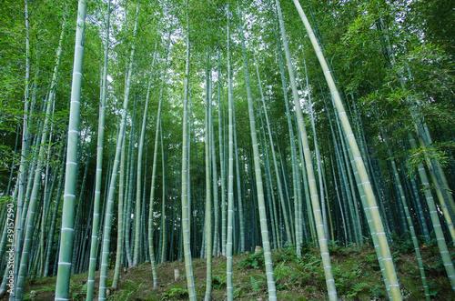 Fototapeta las las-bambusowy