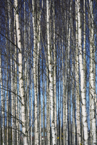 Deurstickers Berkbosje Trees full frame