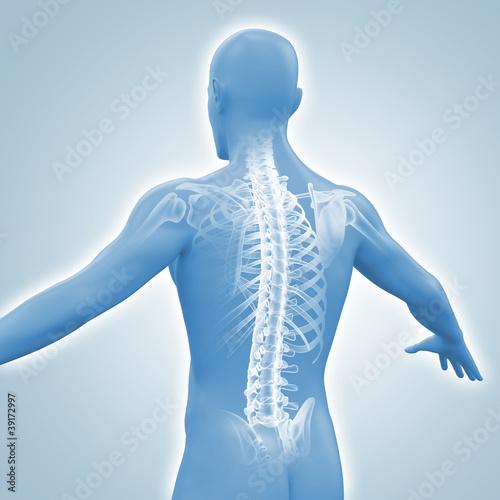 Männlicher Rücken mit dem Röntgenbild der Wirbelsäule – kaufen Sie ...