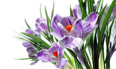 FototapetaSpring flowers