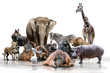 canvas print picture - Wilde Tiere