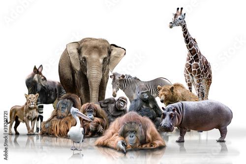 Recess Fitting Zebra Wilde Tiere