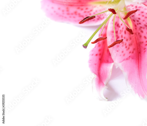 Photo Lily floral template