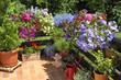 canvas print picture - Balkon mit Sommerblumen.