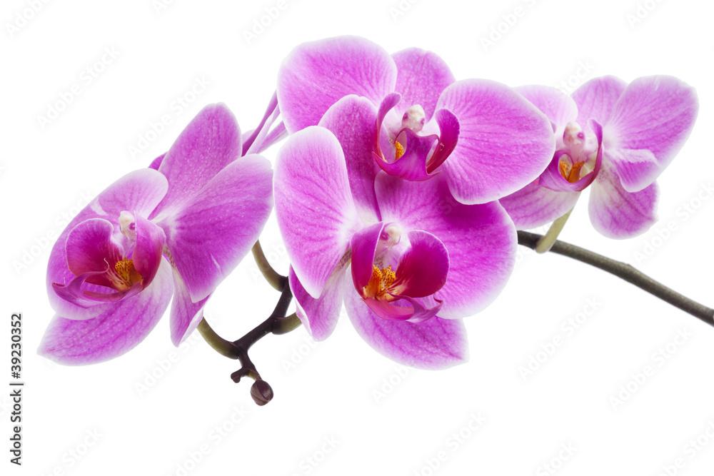 Kuchenruckwand Aus Glas Mit Foto Rosa Orchidee Isoliert Nikkel Art De