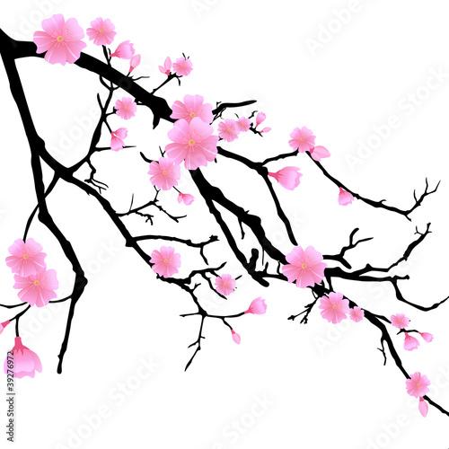 Fotografia  Ast mit Kirschblüten
