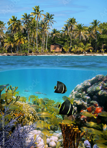 Foto-Leinwand - half above and below water surface, tropical coast with a hut and coconut trees, underwater a colorful coral reef with fish, Caribbean sea