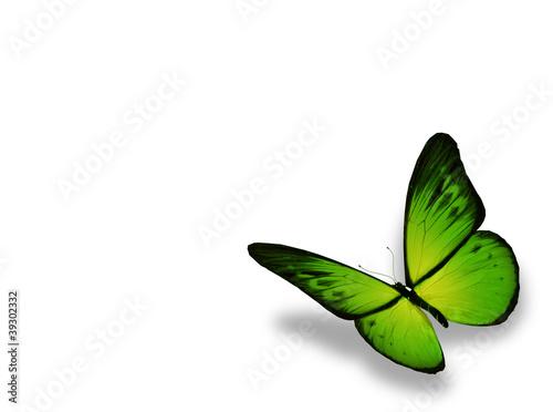 Fototapeta Green butterfly, isolated on white background obraz