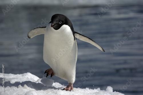 Tuinposter Pinguin Antarctic Penguin