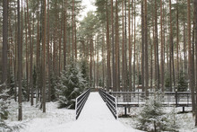 The Katyn Forest