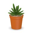 3d render of succulent plant