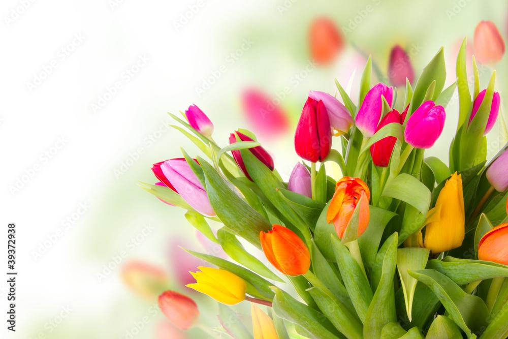 Fototapety, obrazy: Fresh tulips bouquet