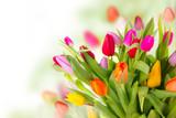 Fototapeta Tulipany - Fresh tulips bouquet