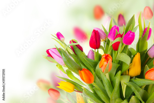 Fotografie, Obraz Fresh tulips bouquet