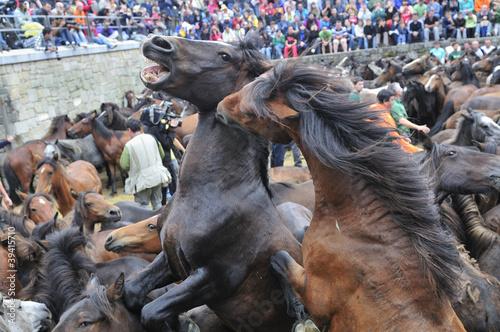 Fotografia Rapa das Bestas Sabucedo