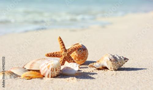 Obraz na płótnie Starfish on the Beach
