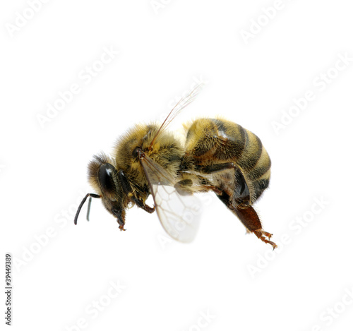 Recess Fitting Bee bee