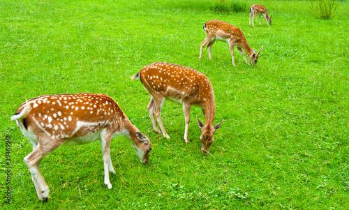 Fototapeten Natur Deers