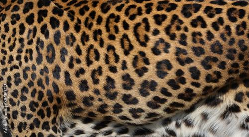 Aluminium Prints Leopard leopard skin