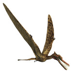 Zhenyuanopterus Dinosaur
