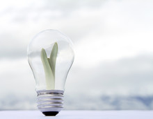 A Plant Growing Inside A Lightbulb
