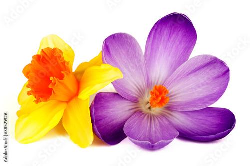 Foto op Plexiglas Krokussen Blüte von Krokus und Narzisse