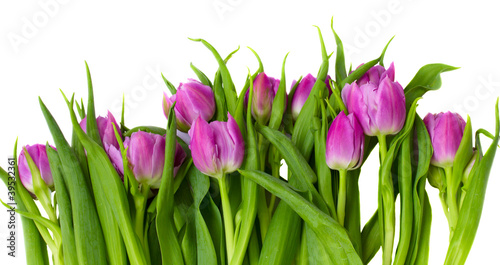 Foto op Aluminium Tulp purple tulips border