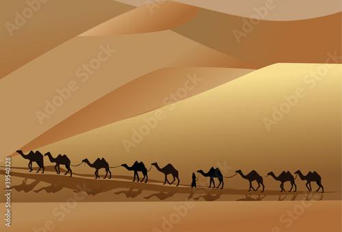 camel in desert Slika na platnu
