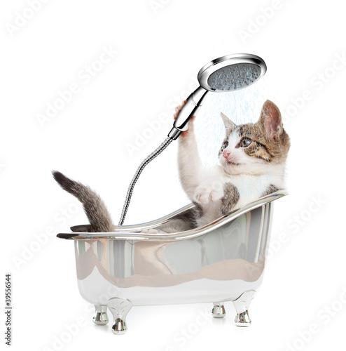 Photo Cat shower