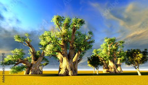 obraz dibond Baobaby afrykańskie