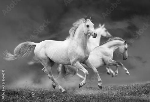 Fototapety czarno białe   biegnace-konie-w-czerni-i-bieli