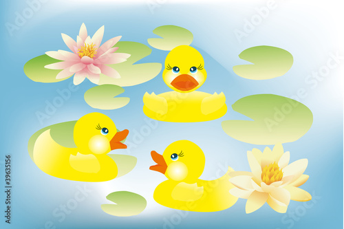 Canvas Prints River, lake Ducklings swimming in lake with lotus flowers