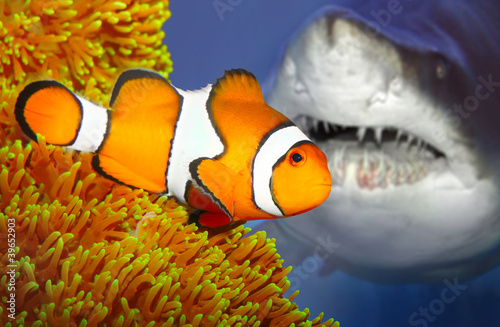 The clownfish and attacking shark. Fototapete