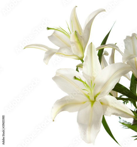 Fotografie, Obraz  a fragment of white lilies ' bunch on a white background