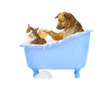 Katzenwäsche, Hund Und Katze ...